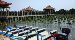 Wisata Mangrove Pekalongan