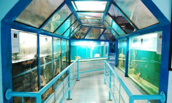 akuarium raksasa di Obyek Wisata Bahari Pekalongan