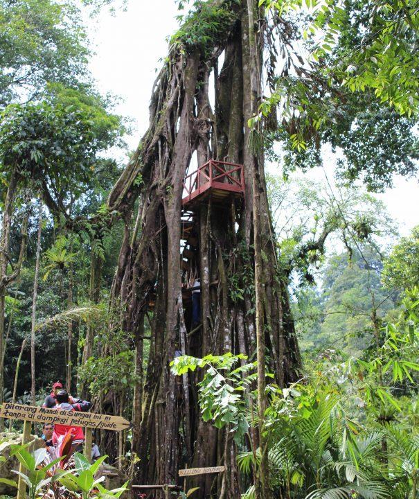 Pohon Selfie Weloriver Petungkriyono