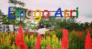 Taman Bunga Celosia Linggo Asri