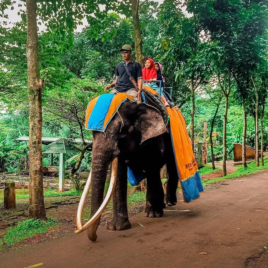 Wahana Naik Gajah Di Linggo Asri