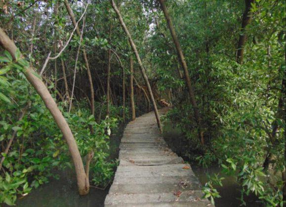 Hutan Mangrove Pemalang